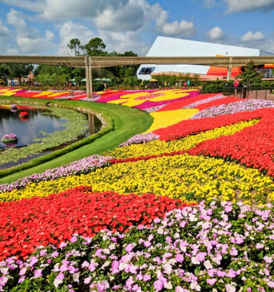 Flowers at Epcot