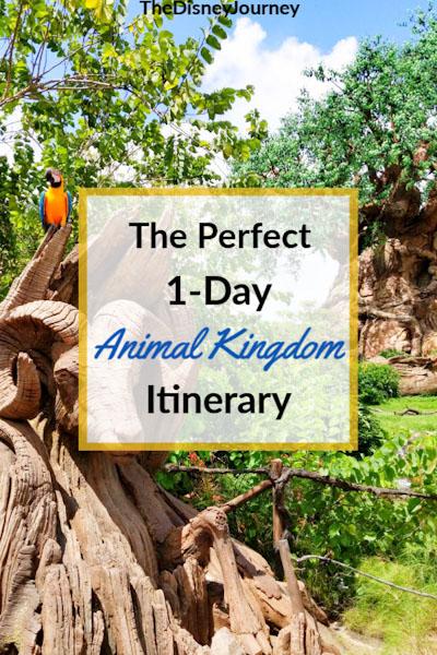 Animal Kingdom touring plan pin image