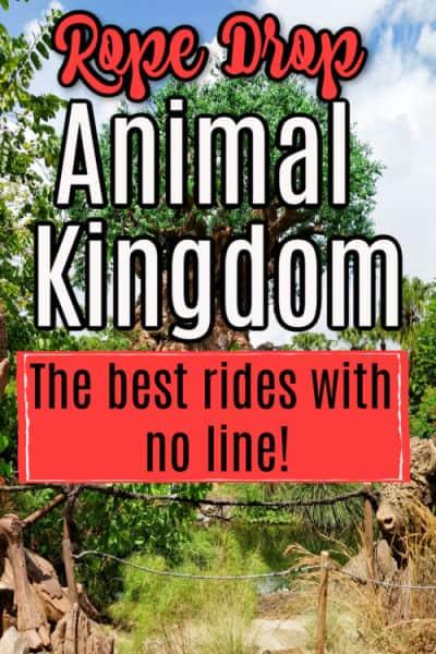 Pin image for Animal Kingdom Rope Drop