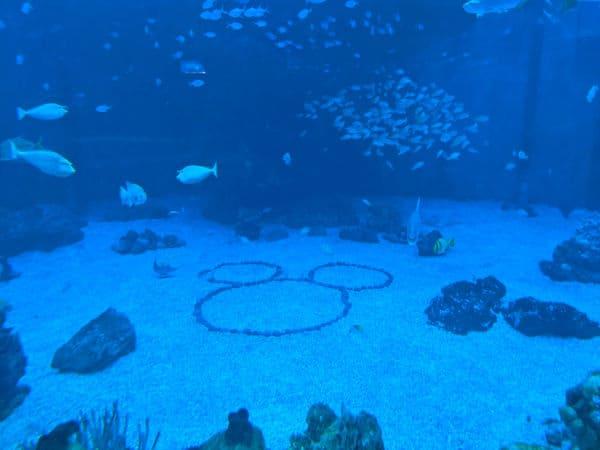Hidden mickey in Epcot aquarium